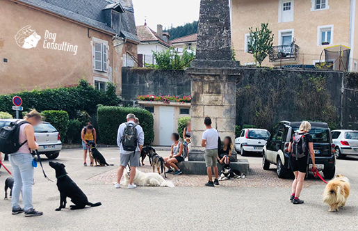 stage chiens en ville